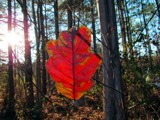 Floating in mid-air by brandondockery, photography->nature gallery