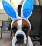 Do I Look Happy?!! by trixxie17, photography->pets gallery