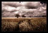 norfolk fields 2 by JQ, Photography->Landscape gallery