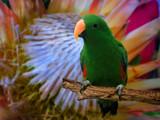Sittin'  Pretty by phasmid, Photography->Birds gallery