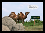 So You Wanna Go Back To Egypt by Jimbobedsel, photography->manipulation gallery