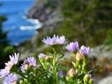 Ocean Breeze by Lithfo, Photography->Flowers gallery