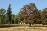 Hyde Park, London by Paul_Gerritsen, Photography->Landscape gallery