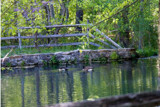 The Pond at Tyler's by photog024, Photography->Landscape gallery
