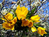 My Tulip Tree! by marilynjane, Photography->Flowers gallery