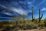Saguaro Country by snapshooter87, photography->landscape gallery