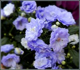 Even the Flowers Turned Blue! by trixxie17, photography->flowers gallery