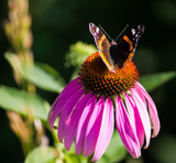 Sitting Pretty by Pistos, photography->butterflies gallery