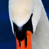 The Look #3 by braces, Photography->Birds gallery