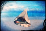 Washed Ashore by mesmerized, photography->manipulation gallery