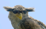 My Furry Little Friend by FlyingBanana, Photography->Birds gallery