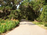 Entry to Magnolia Plantation by lilkittees, Photography->Landscape gallery