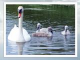 Just Like Mum by Ravenwyng, Photography->Birds gallery