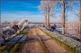 Image: Hoar Frost 2
