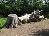 Big Log by Hottrockin, photography->landscape gallery