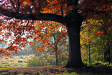 Autumn Enchantment by Silvanus, photography->landscape gallery
