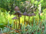 Mushroom Forest 2.0 by chrblr, Photography->Mushrooms gallery