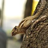 Squirrel Yoga by prashanth, photography->animals gallery