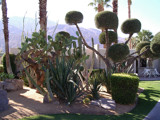 Palm Springs Trees by rws1943, Photography->Landscape gallery