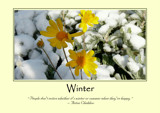 Winter Poster by LynEve, photography->flowers gallery