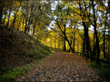 A Road Not Traveled by amishy, Photography->Landscape gallery