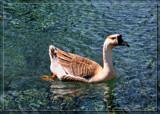 It's A Hard Knock Life by Jimbobedsel, Photography->Birds gallery
