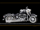 Black Harley by Surfcat, Photography->Transportation gallery