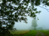 Moist View by SEFA, Photography->Landscape gallery