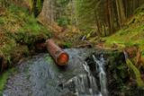 Log Jam by biffobear, photography->waterfalls gallery
