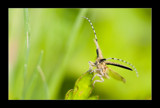 Golden Take-off by kodo34, Photography->Insects/Spiders gallery