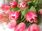 Alive with Tulips! by marilynjane, Photography->Flowers gallery