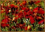 Fall Scene by trixxie17, photography->flowers gallery
