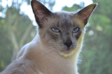 Scrat 1 by josleg, photography->pets gallery