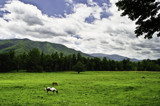 Valley Pasture by mikerkim, Photography->Landscape gallery