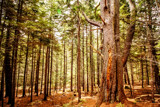 Forest Giant by Eubeen, photography->landscape gallery
