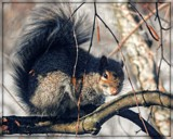 Things are Squirrelly! by trixxie17, photography->animals gallery