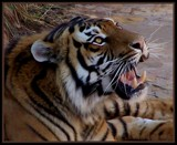 Count my Teeth by SusanVenter, Photography->Animals gallery