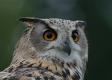 Owl headshot 1 by barnstormer, Photography->Birds gallery