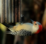 The Birds Are Back #7 by tigger3, photography->birds gallery