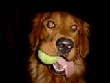 Tennis Anyone? by Gergie, photography->animals gallery