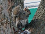 Lunch Break by dwdharvey, Photography->Animals gallery