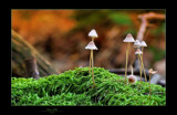 Colors of Fall 2 by kodo34, Photography->Mushrooms gallery
