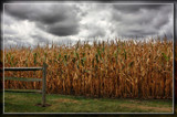 Corn and Clouds by Jimbobedsel, photography->landscape gallery