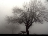 Lone Tree In Heavy Fog by verenabloo, photography->landscape gallery