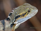 Come Closer by Samatar, Photography->Reptiles/amphibians gallery