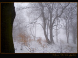 it's a mystery... by fogz, Photography->Landscape gallery