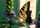 Why I Visit Greenhouses by rhelms, Photography->Butterflies gallery