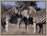 Four of a Kind... by SusanVenter, Photography->Animals gallery