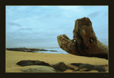 Beached Log by dmk, Photography->Shorelines gallery