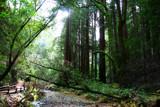 Green Dream by soosool, Photography->Landscape gallery